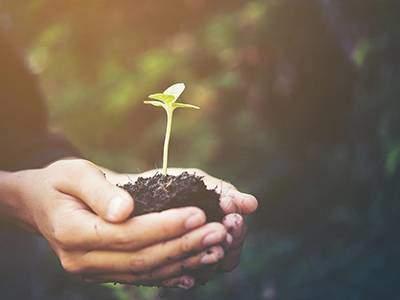 Plantes cultivées